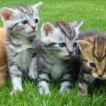 マンションで飼いやすい猫ちゃんランキング!