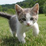 猫好きの彼女が喜ぶ 5,000円以下で買えるプレゼントはコレだ