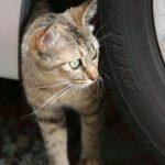 【猫バンバン】ねこがボンネットの中に入るのを防ぐ方法